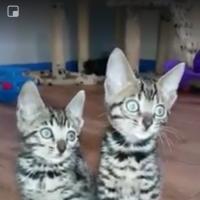 kittykat55
