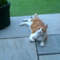Morecat