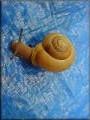 Bham Snail