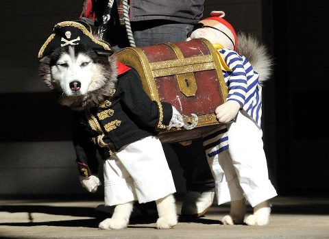 /members/images/236856/Gallery/pirate_dog.jpg