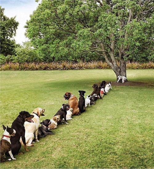 /members/images/26252/Gallery/deforestation.jpg