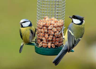 /members/images/497484/Gallery/observing-garden-birds.jpg