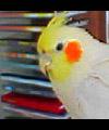 parrotmad