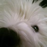 Whitedog