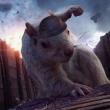 DrSquirrelBoy12