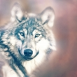 wolfskid