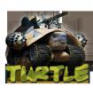turtle2459