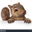 SquirrelLadd