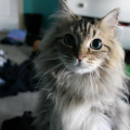 catman99