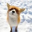 MonkFox