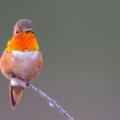 birdpixel