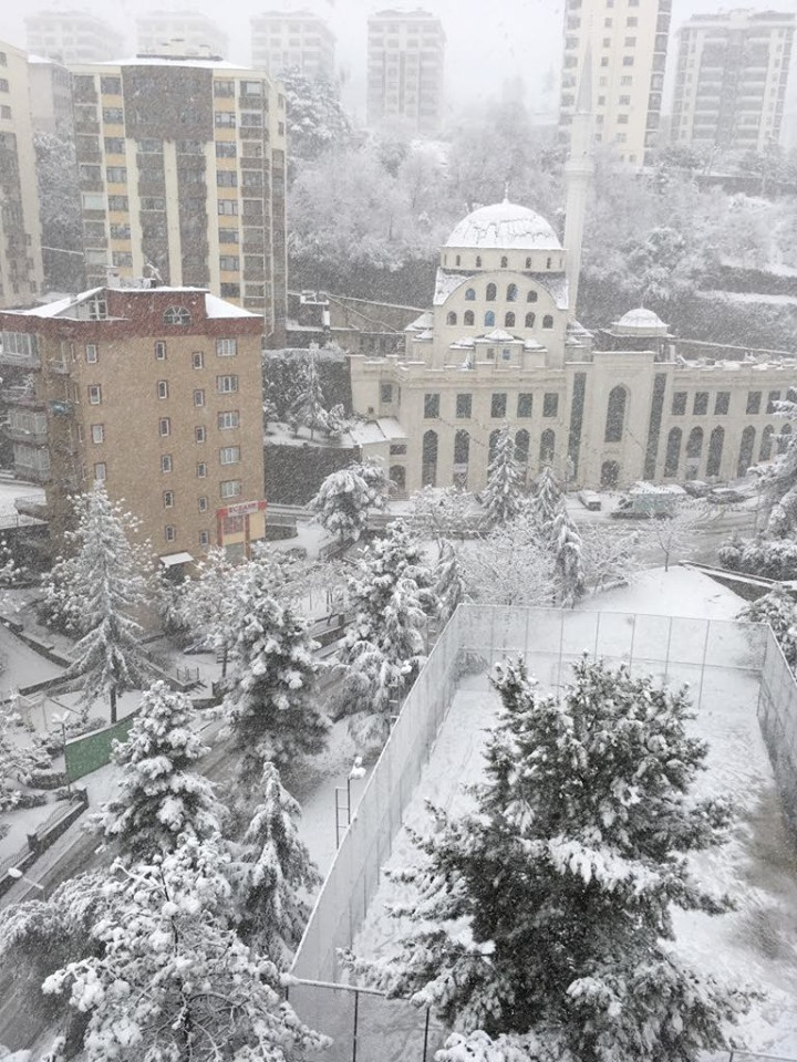 2020-02 Snowfall.jpg