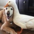 DuckDawg