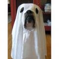 ghostofuga1