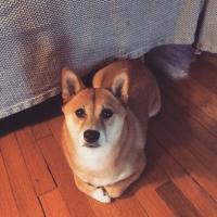 Jessica_Community
