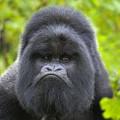 Monkey104