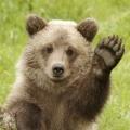 Zyxel_Bear