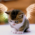 CatWithWings