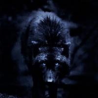 Schwarzerwolf