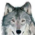 Old_Wolf
