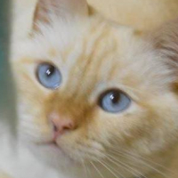 Milo_Blue_Eyes
