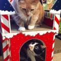 CatsterAdmin