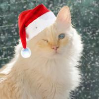 blindcat_donovan