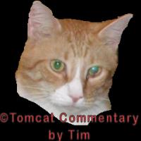 Timmy_Tomcat
