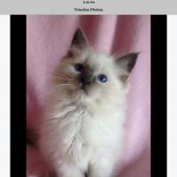 catster1