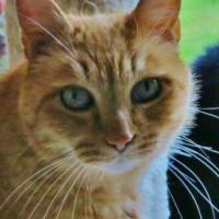 kittycatclh