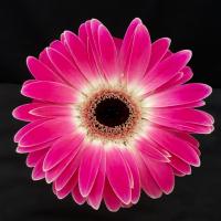 Floralynne