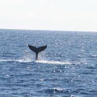 WhaleLover
