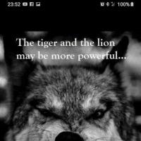 wolfden3