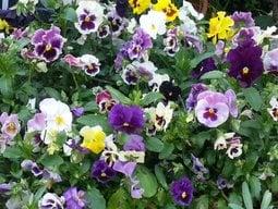 Flowerlover3