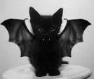 BatNix