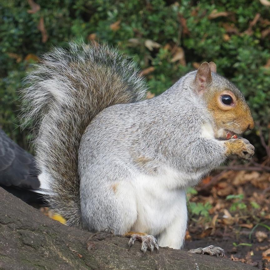 LauraSquirrel