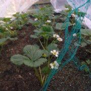 My Garden Spade