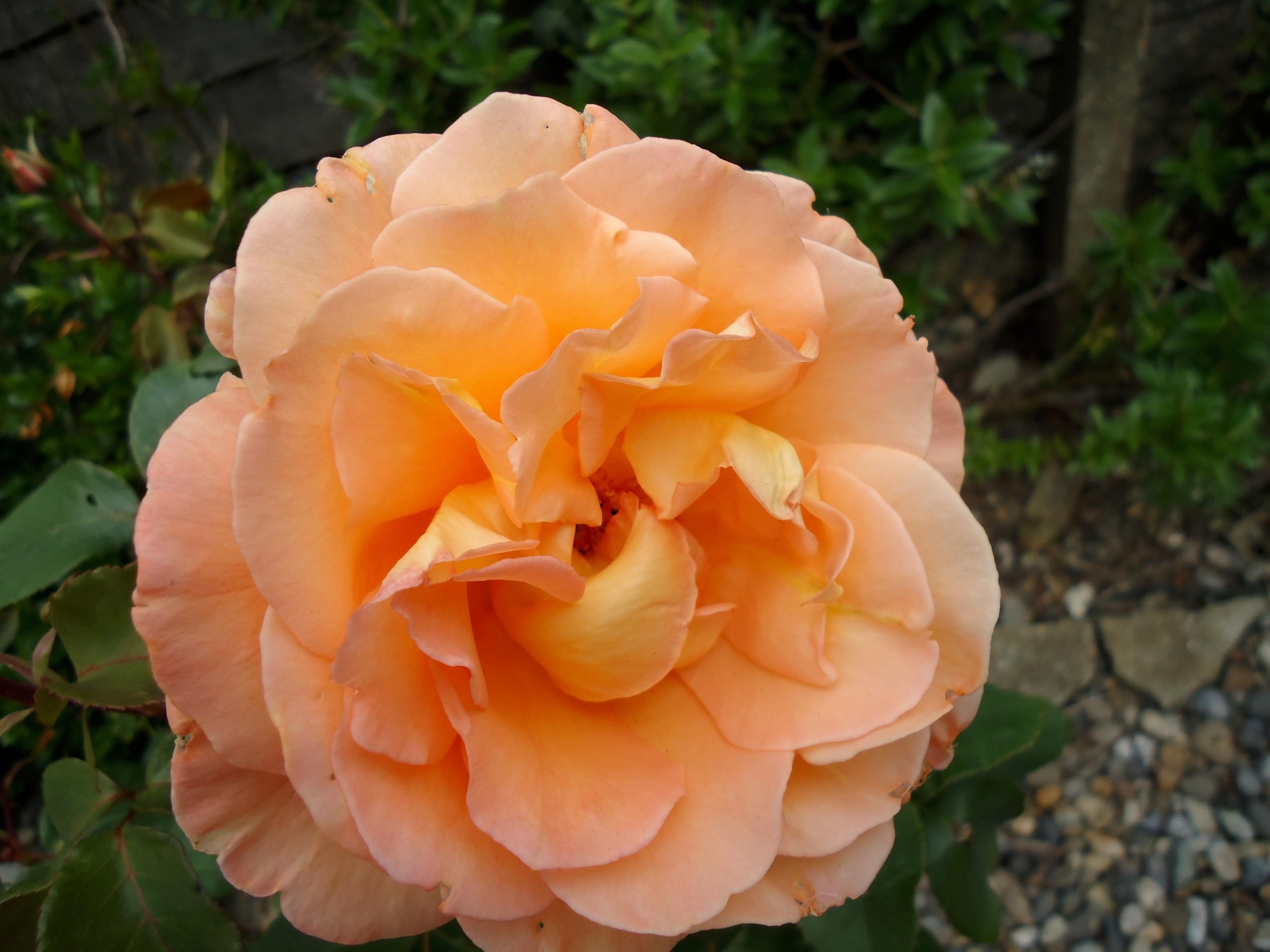 flowermaster9