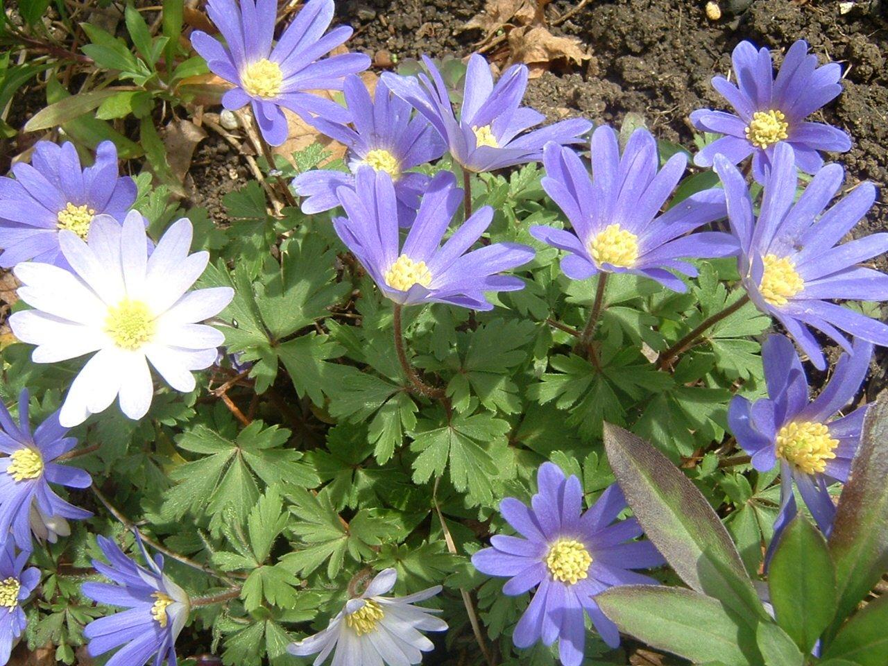gardenninggranny