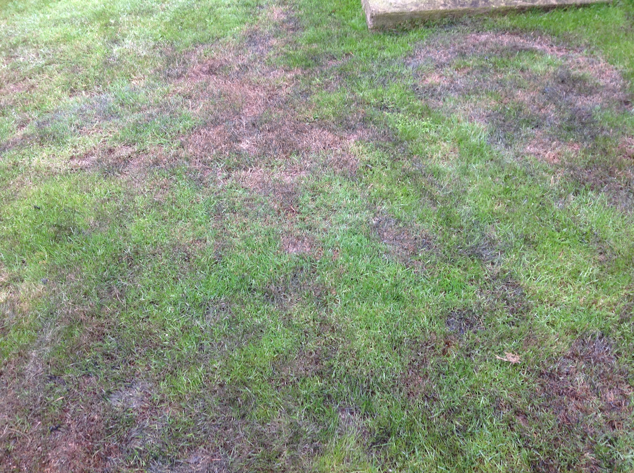 Have I Killed My Lawn With Evergreen Forum Gardenersworld