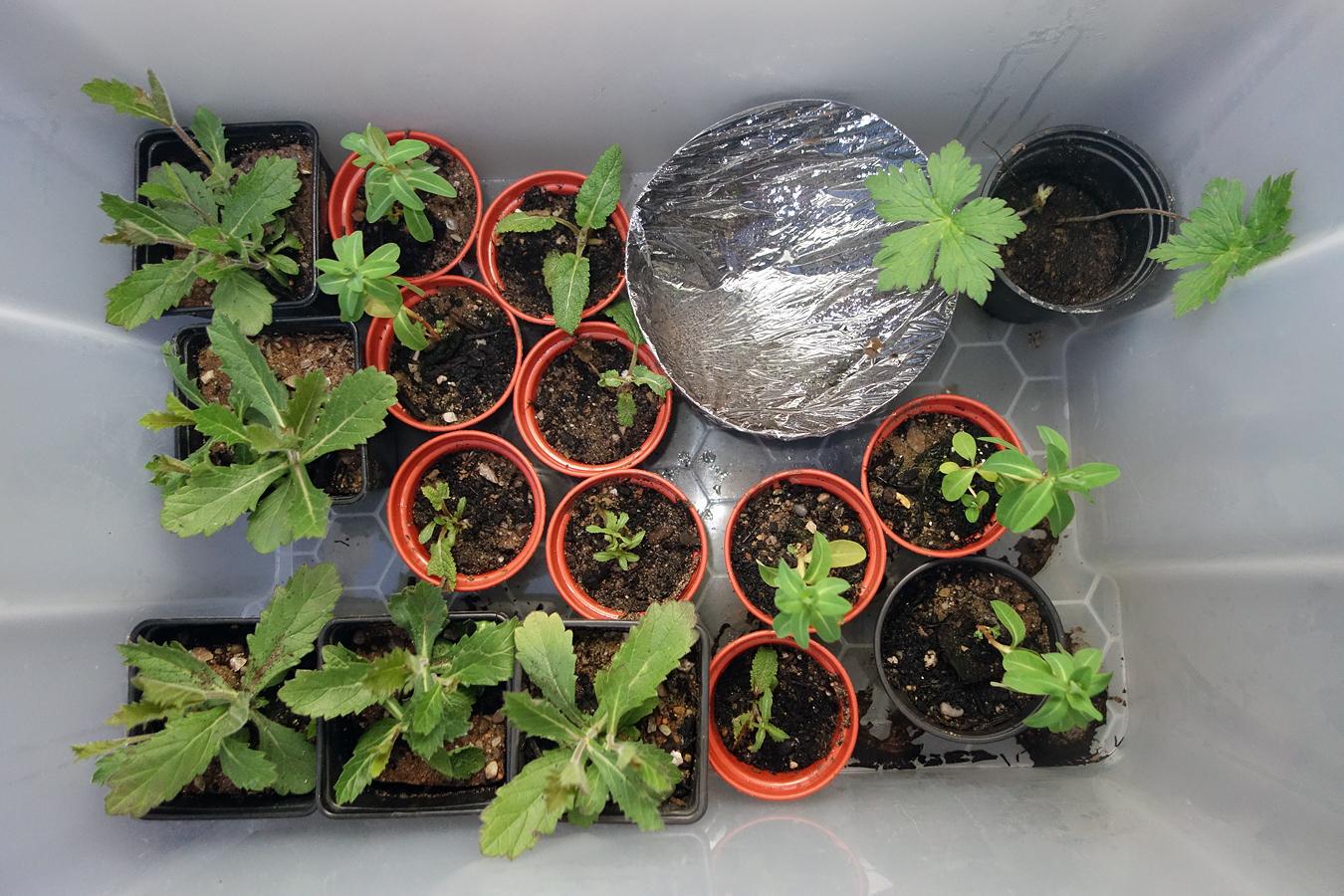 Plastic Storage Box As A Mini Greenhouse Bbc Gardeners World Magazine