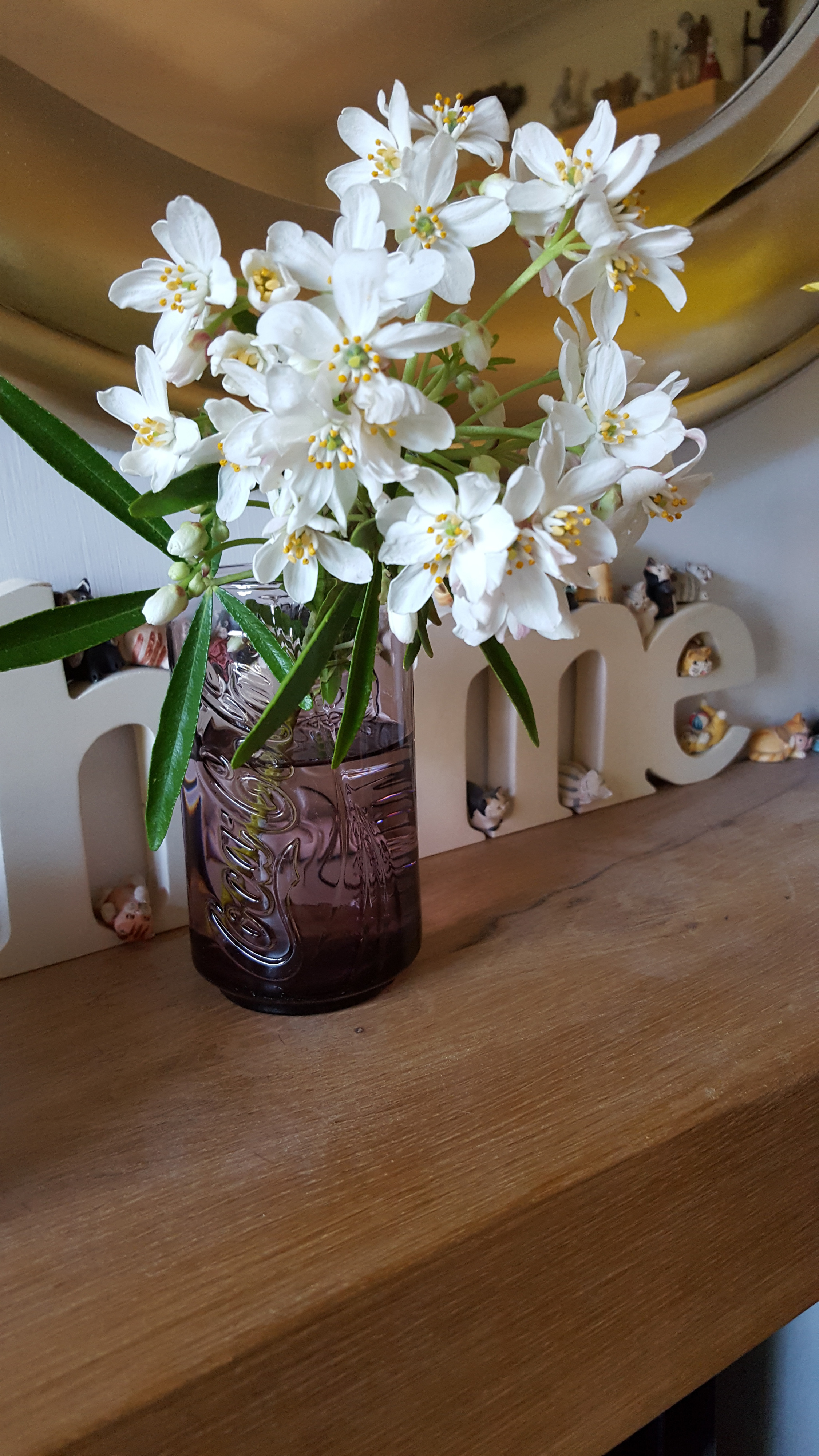 Jam Jar Flowers Forum Gardenersworld Com