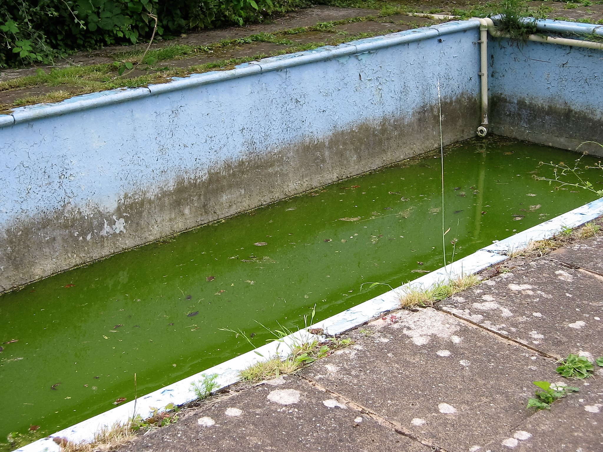 How To Get Rid Of A Disused Swimming Pool Forum