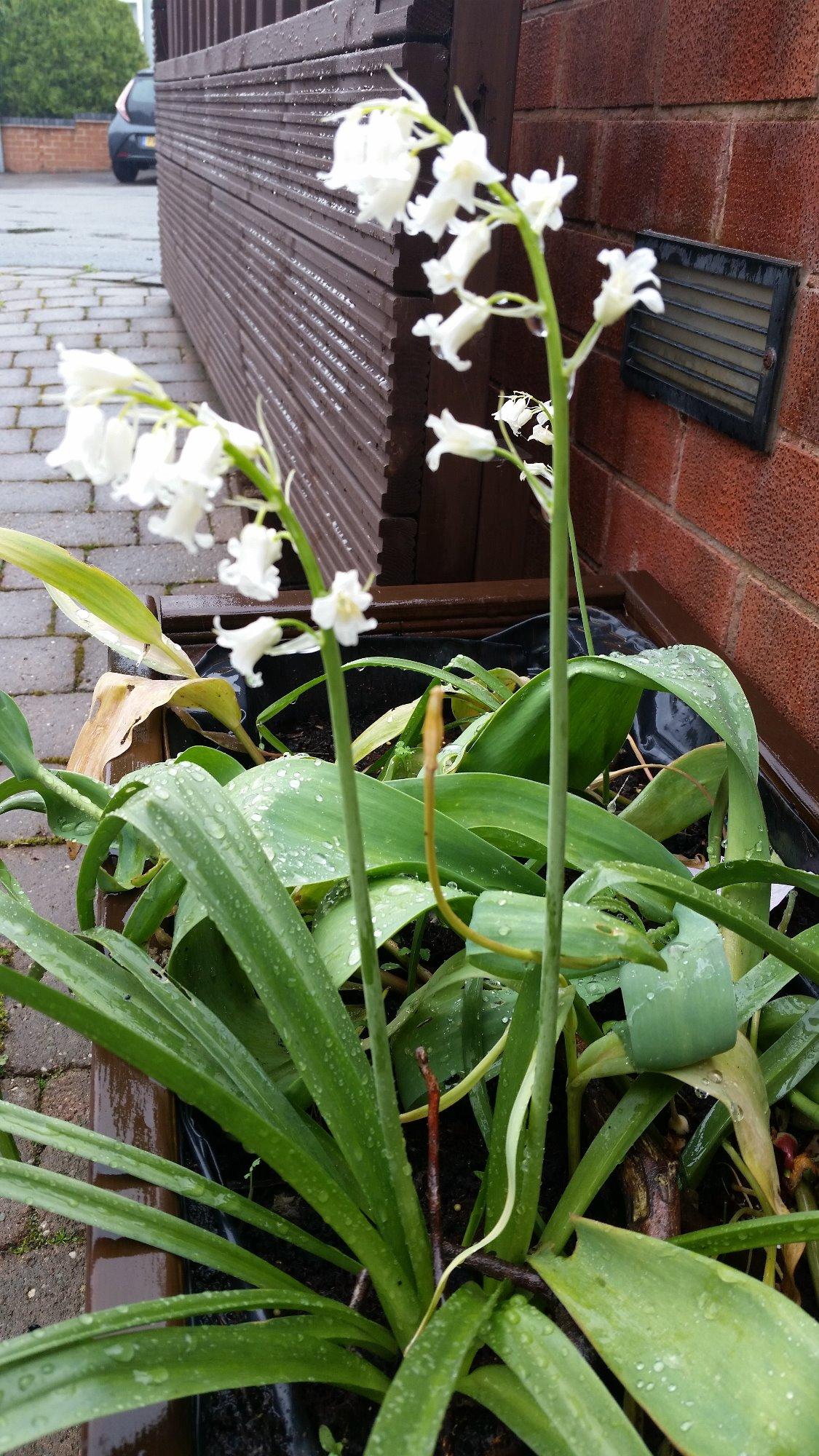 Flower Identification Forum Gardenersworld