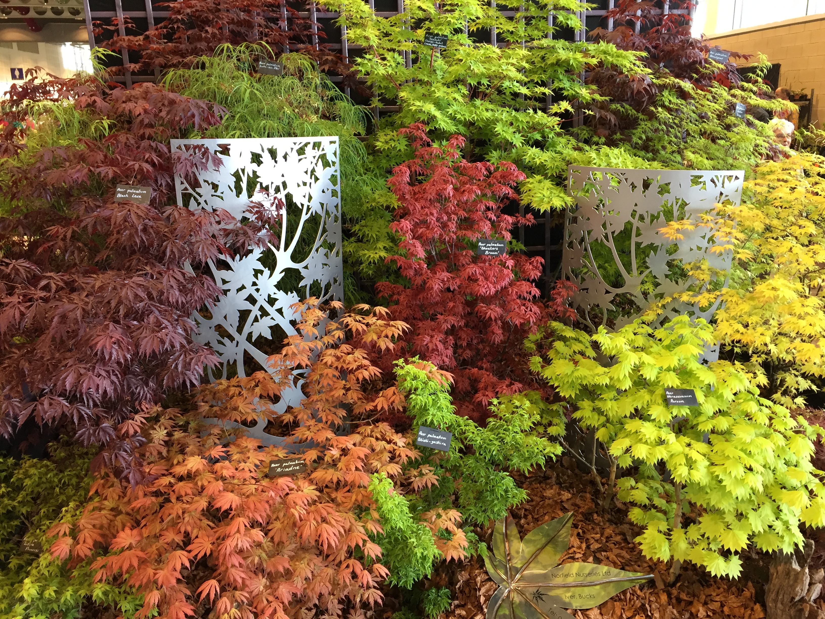 Harrogate Spring Flower Show Forum Gardenersworld