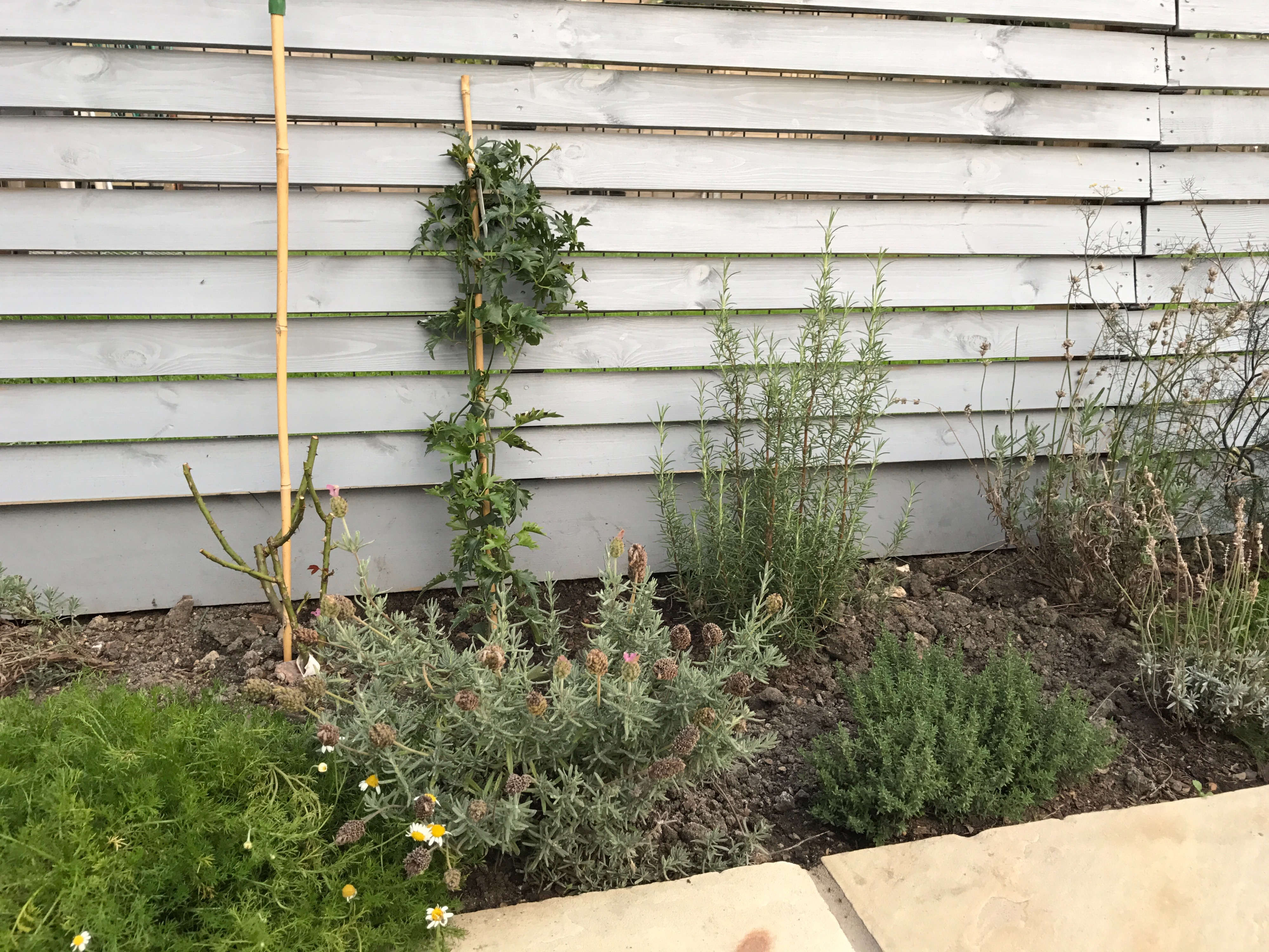 Clematis And Lavender Border Forum Gardenersworld Com