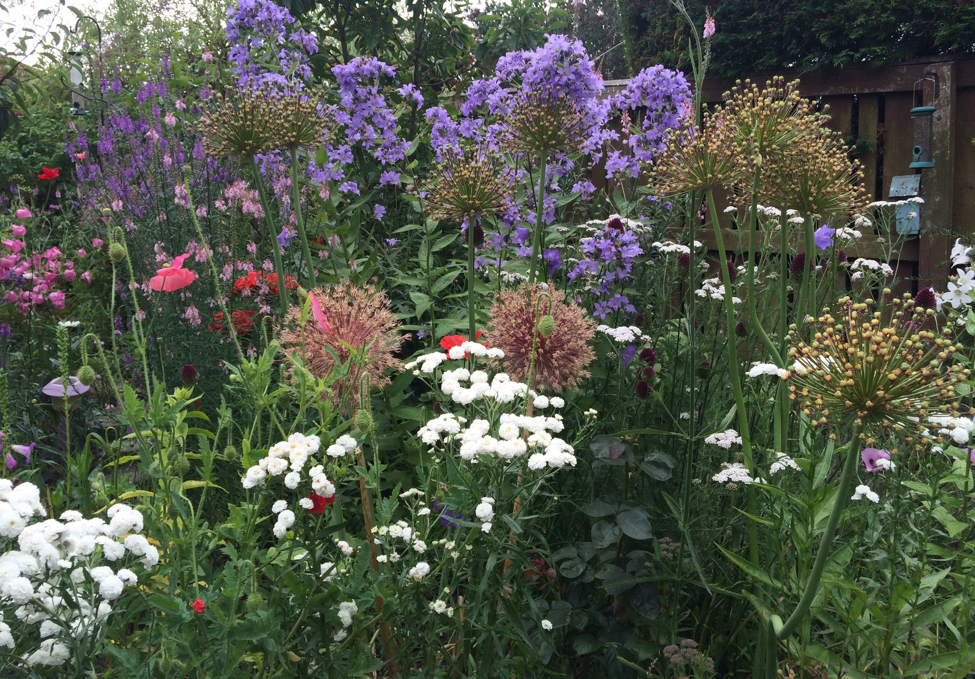 Yarrow Bbc Gardeners World Magazine