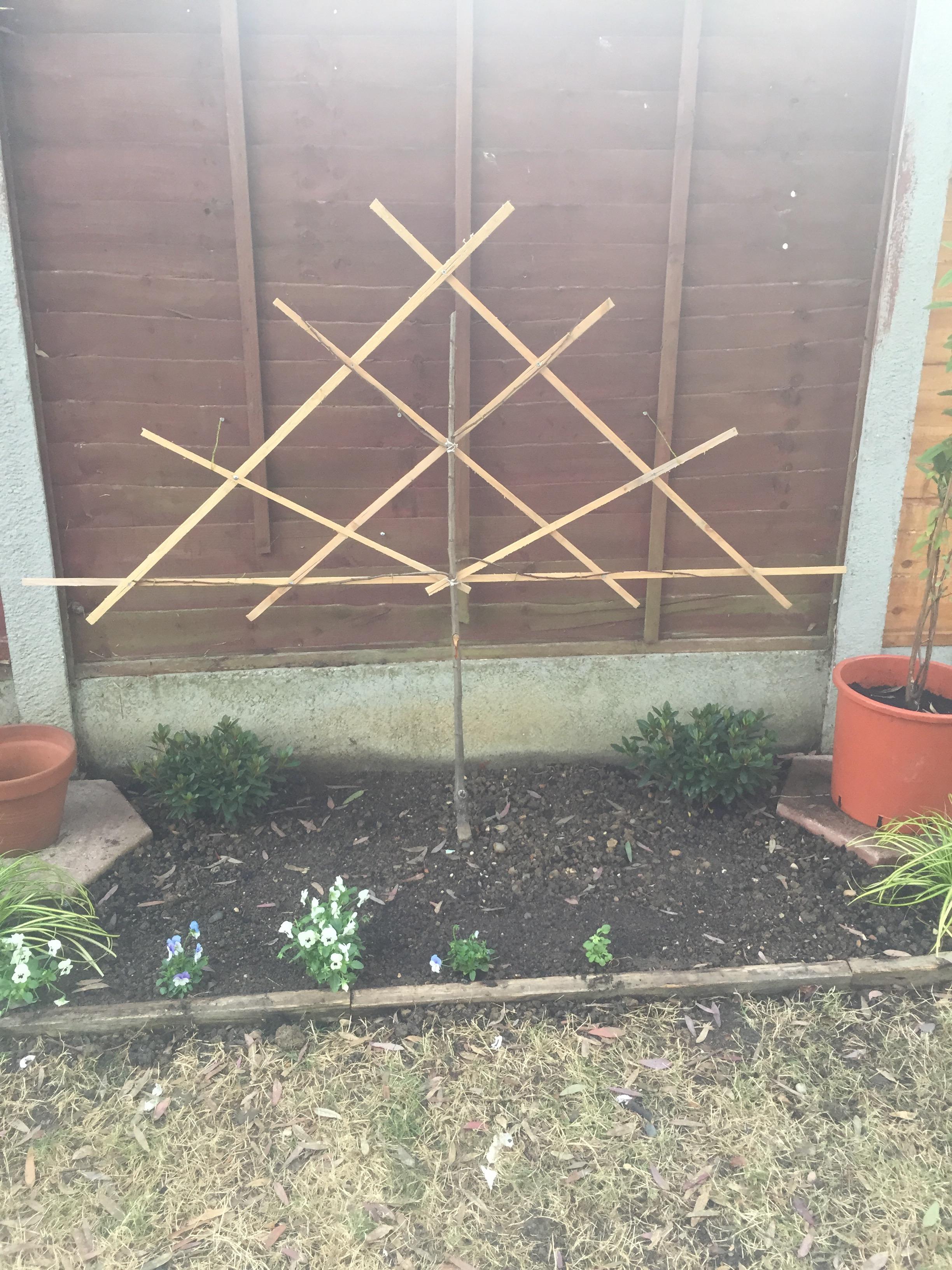 My garden redesign progress forum for Redesign my garden