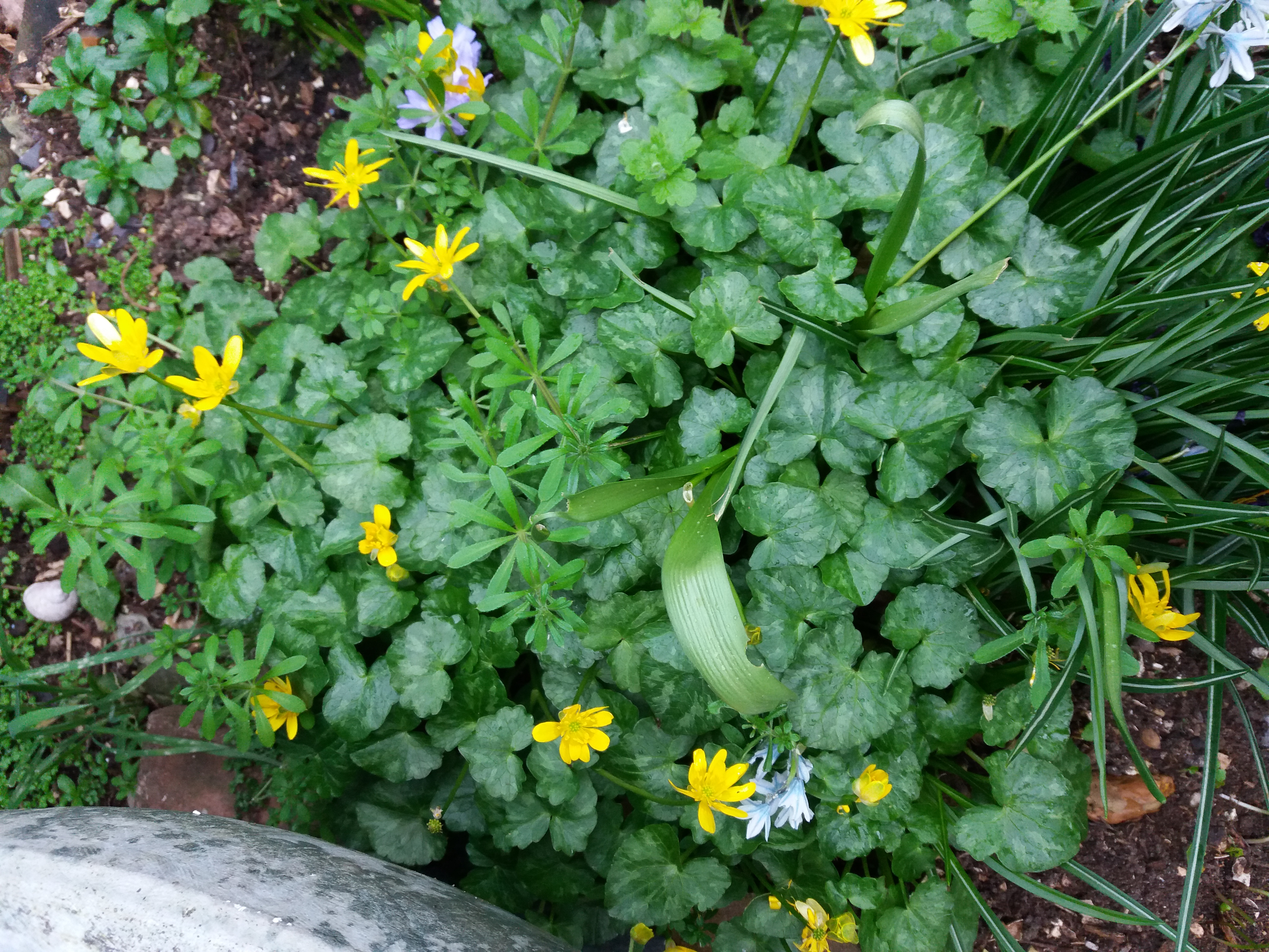 What Are These Plants Is The Yellow One A Weed Forum