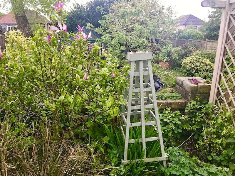 Pruning Magnolia Forum Gardenersworldcom